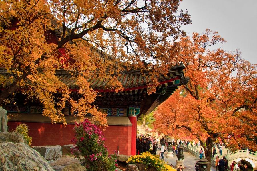 北京的秋天一定要看一场香山的红叶 北京是一个四季分明的城市,各有各的美,但是秋天无疑是一年中北京最美的季节。少有雾霾的侵扰,几乎每天都可以看见天高云淡、万里无云,等到了深秋,枫叶红了,就是时候去香山看一眼红叶了~ 北京香山红叶远近闻名,那么北京香山红叶什么时候红呢?  北京著名的森林公园,票价实惠,山上的空气也好,很适合去爬山锻炼身体。秋天是香山最美的季节,漫山的红色枫叶像耀眼的火焰一样。但是人真的超级多,不推荐节假日前往。 香山公园位于北京西郊,景区内主峰香炉峰俗称鬼见愁。  园内文物古迹众多